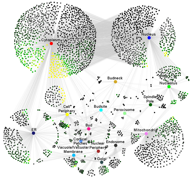 A NETWORK SHOWING LOCALIZATION AND MOVEMENT OF PROTEINS WITHIN THE CELL