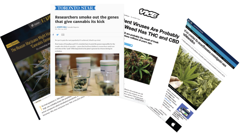 cannabis press
