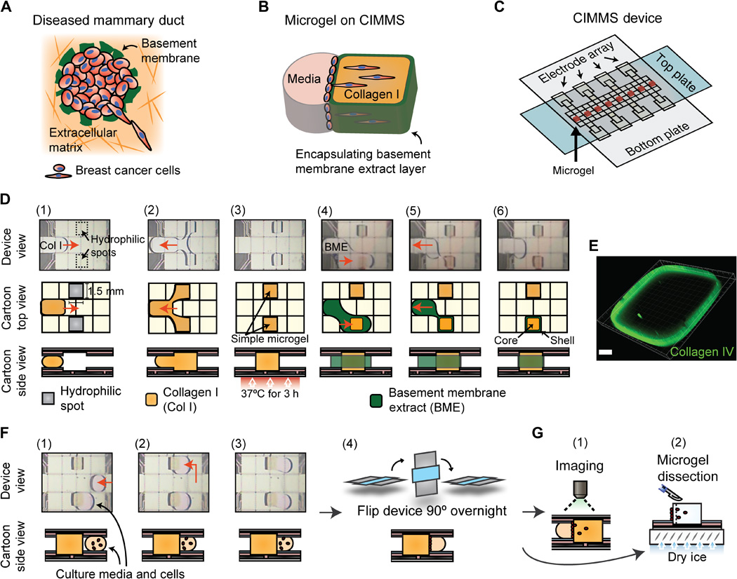 Cell invasion in digital microfluidic microgel systems Figure 1